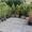Декоративные растения для озеленения и ландшафтного дизайна #1257302