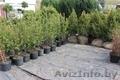 Декоративные растения для озеленения и ландшафтного дизайна